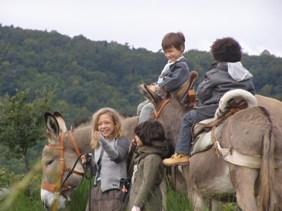 Balades avec anes et poneys dans les monts du Lyonnais
